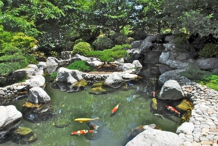 The Mesmerizing Koi Pond And Waterfall, Typical Of A San Sui (mountain And  Water) Style Japanese Garden.