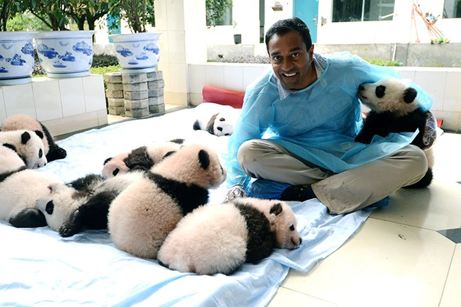 Dr. Sanjayan with baby pandas (Courtesy PBS)