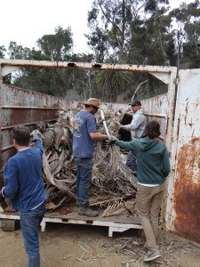 Volunteers clean up Maple Canyon, such as hauling dead palm fronds to a trash bin. (Courtesy of Friends of Maple Canyon)
