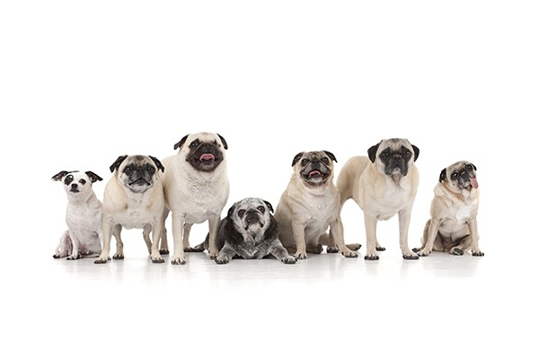 Bug, Louis, Lola, Lucy, Patch, Samba and Yoda (Courtesy of Oh My Dog! Photography)