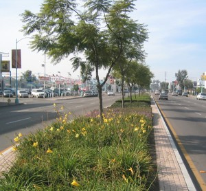Landscaping improvements to The Boulevard (Courtesy of El Cajon Boulevard Business Improvement Association)