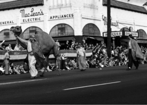 San Diego Zoo camels in the 1958 Toyland Parade at Kansas Street and University Avenue (Courtesy of Joe Schloss)