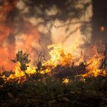 Atkins on wildfire risks: 'Inaction is not an option'