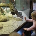 The Nat shows off its living animals to the public